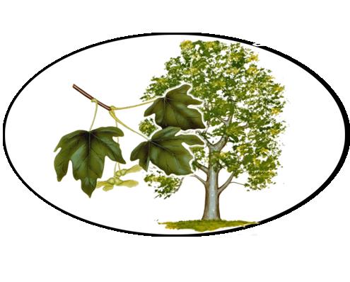 B&B Le Bianchelle - Foligno